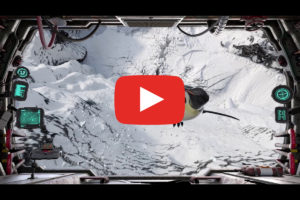 play-video-arctic-4d
