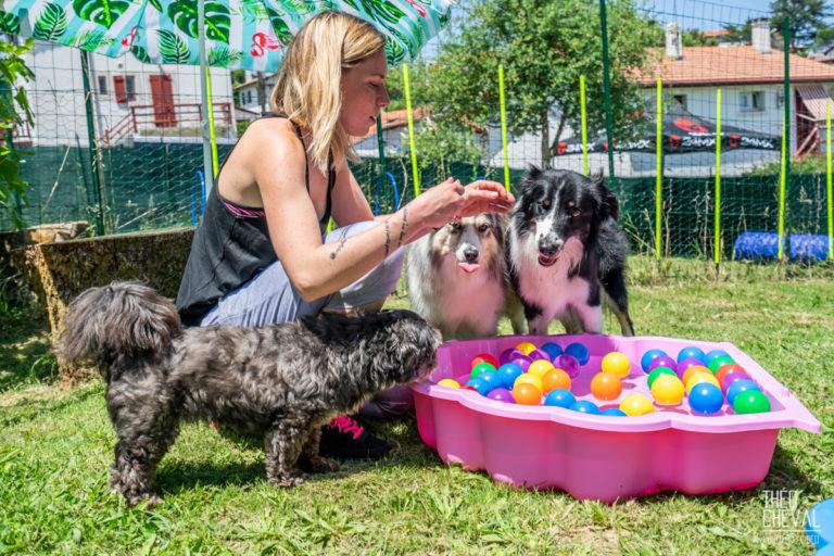 Dressage : Dolce Canine à Bidart