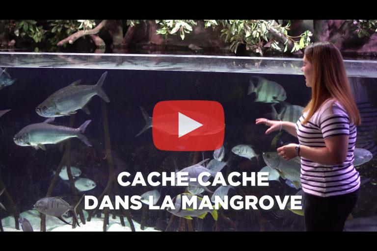 Aquarium de Biarritz – Animation «Cache-cache dans la mangrove»