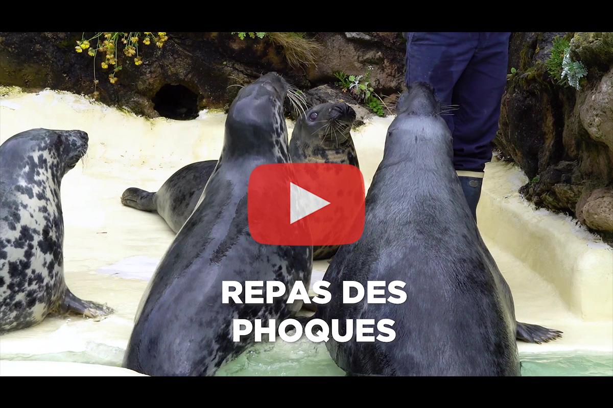 Aquarium de Biarritz – Animation «Repas des phoques»