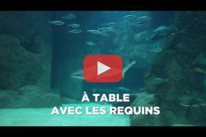 theo-cheval-video-2019-aquarium-biarritz-animation-repas-requins