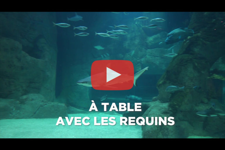 Aquarium de Biarritz – Animation  « A table avec les requins »