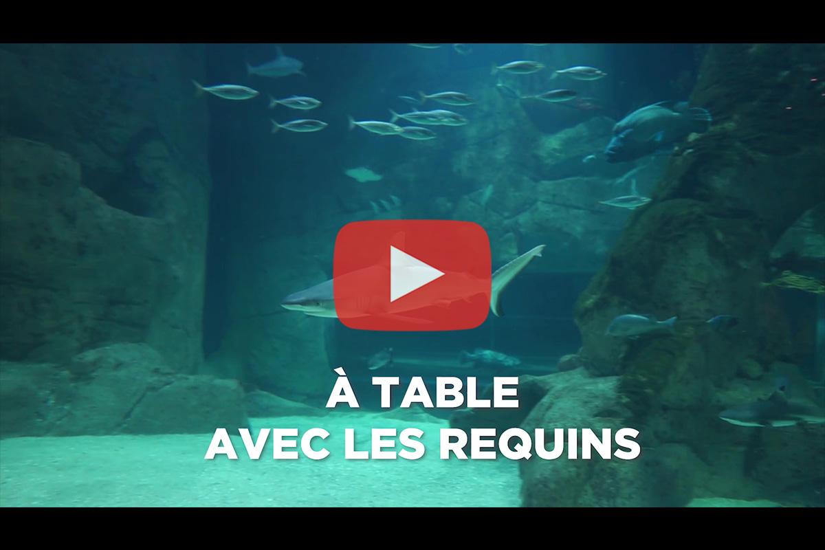 Aquarium de Biarritz – Animation  «A table avec les requins»