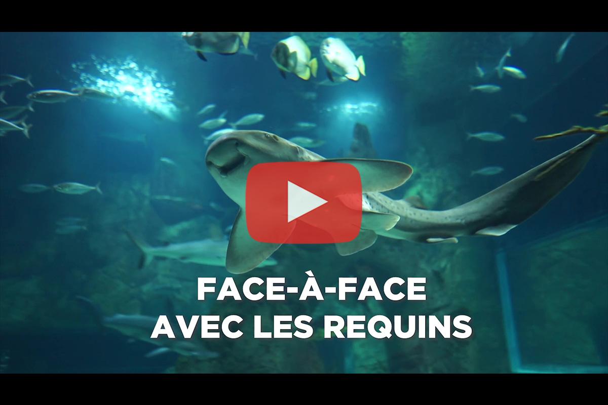 Aquarium de Biarritz – Animation «Face-à-face avec les requins»