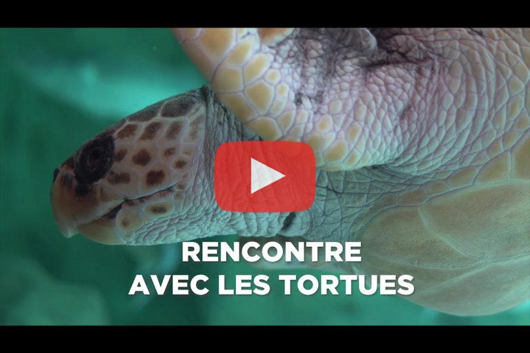 Aquarium de Biarritz – Animation «Rencontre avec les tortues»