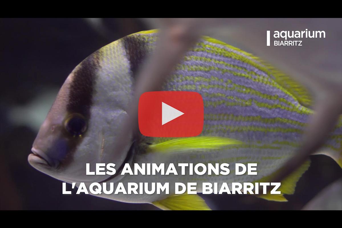 Aquarium de Biarritz – Animations 2019 (version courte)