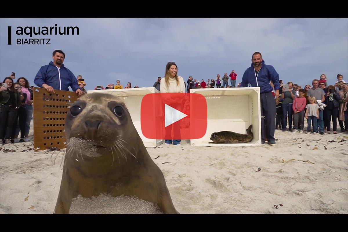 Relâcher de phoques par l'Aquarium de Biarritz et Laury Thilleman