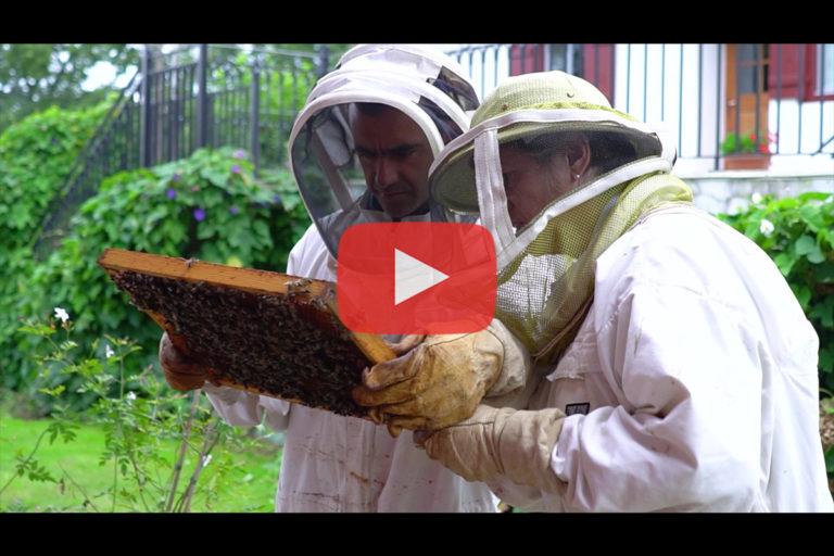 Les ruches de Mikela à Ascain – avec The Eco Attitude