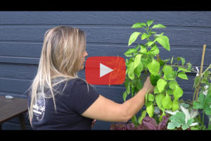theo-cheval-video-2019-the-eco-attitude-potager-healthy-cafe
