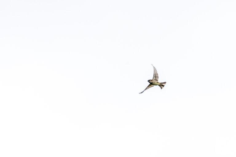 Oiseaux : Origami