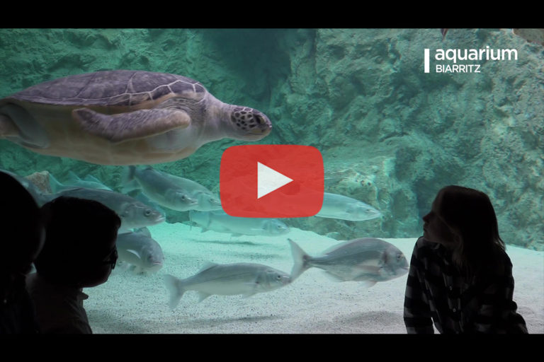 Aquarium de Biarritz – Animations 2019 (version longue)